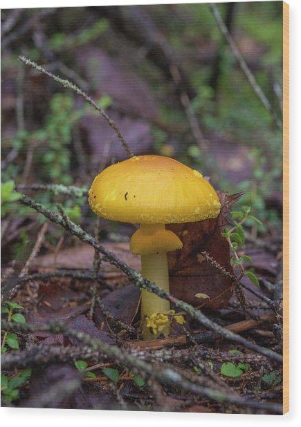 Golden Cap Wood Print