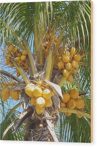 Golden Coconuts Key West Wood Print