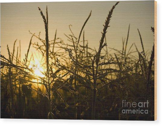 Golden Corn Wood Print