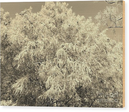 Golden Cypress - Sepia Wood Print