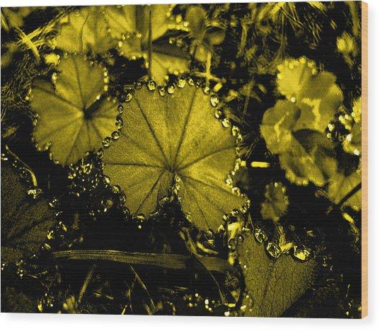 Golden Dew Wood Print