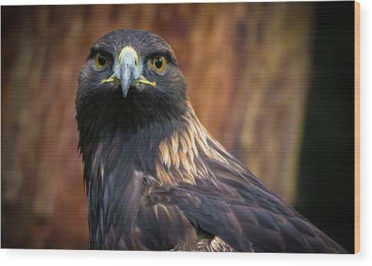 Golden Eagle 1 Wood Print
