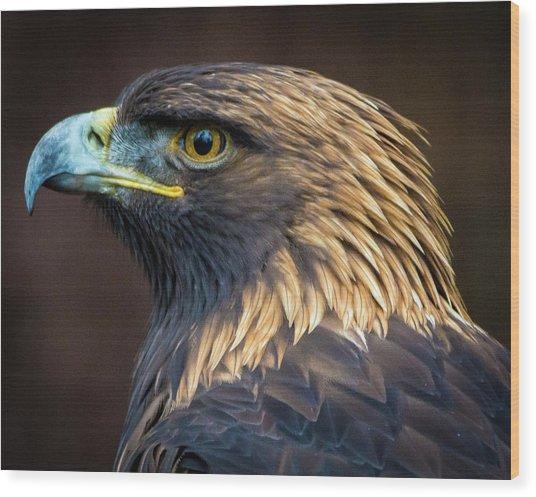 Golden Eagle 2 Wood Print
