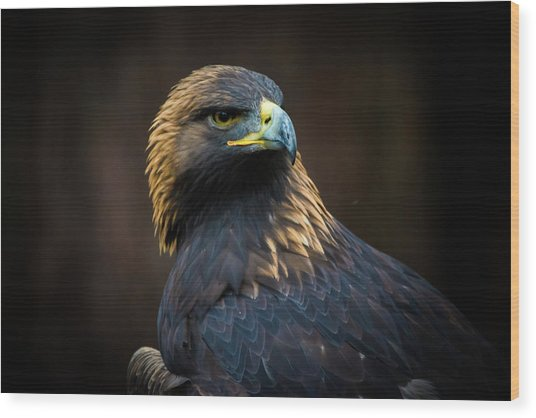 Golden Eagle 3 Wood Print