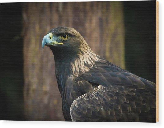 Golden Eagle 5 Wood Print
