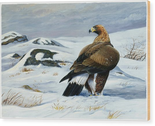 Golden Eagle Wood Print by Dag Peterson