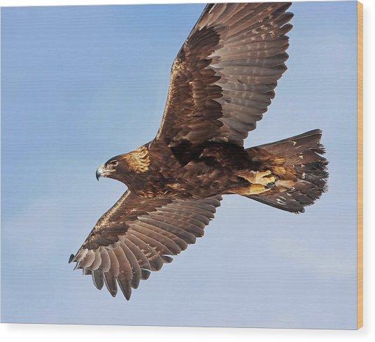 Golden Eagle Flight Wood Print