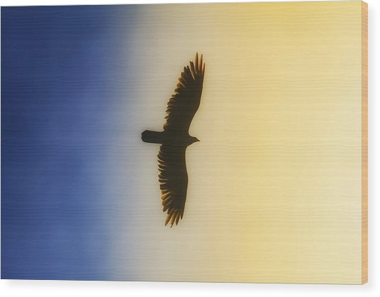 Golden Eagle Over Friday Harbor Wood Print