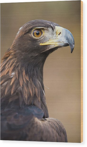 Wood Print featuring the photograph Golden Eagle by Wesley Aston