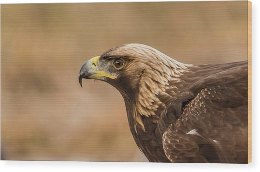Golden Eagle's Portrait Wood Print