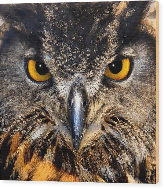 Golden Eyes - Great Horned Owl Wood Print