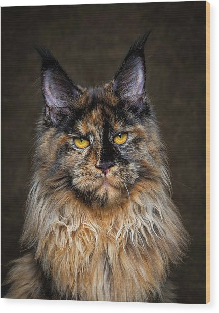 Golden Eyes Wood Print
