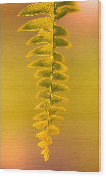 Golden Fern Wood Print