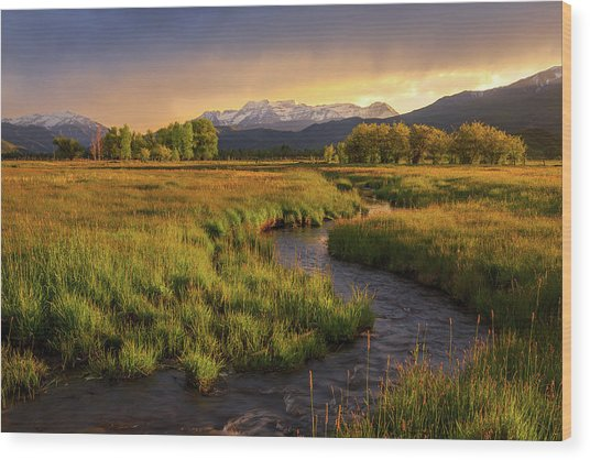 Golden Field In Heber Valley. Wood Print