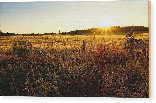 Golden Fields Wood Print