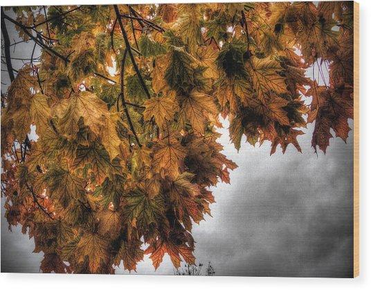 Golden Foliage  Wood Print