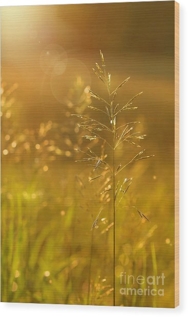 Golden Glow Wood Print