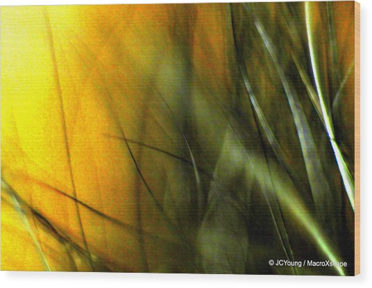Golden Green Field Wood Print by JCYoung MacroXscape