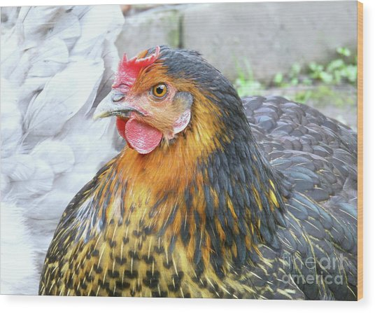 Golden Hen Wood Print