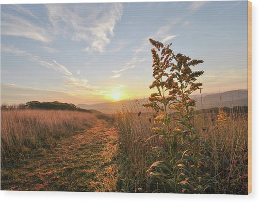 Golden Landscape Wood Print