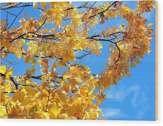 Golden Leaves Ll Wood Print