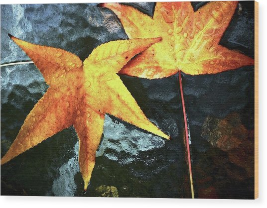 Golden Liquidambar Leaves Wood Print
