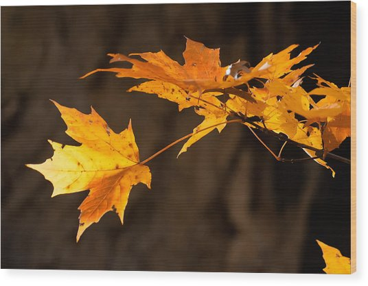 Golden Maple Arch Wood Print