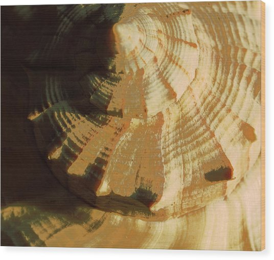Golden Mean I Wood Print