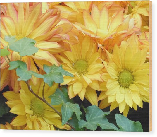 Golden Mums And Ivy Wood Print