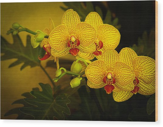 Golden Orchids Wood Print
