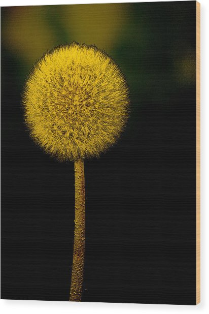 Golden Parachute Wood Print