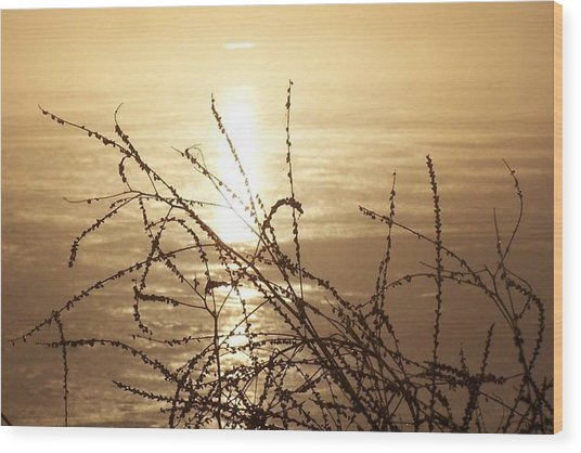 Golden Pond Wood Print by Laurie Prentice