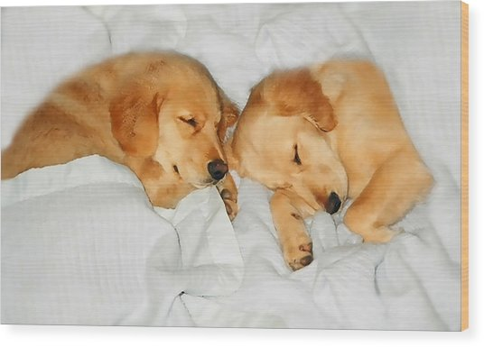 Golden Retriever Dog Puppies Sleeping Wood Print