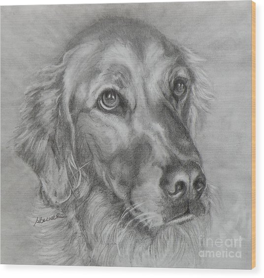 Golden Retriever Drawing Wood Print