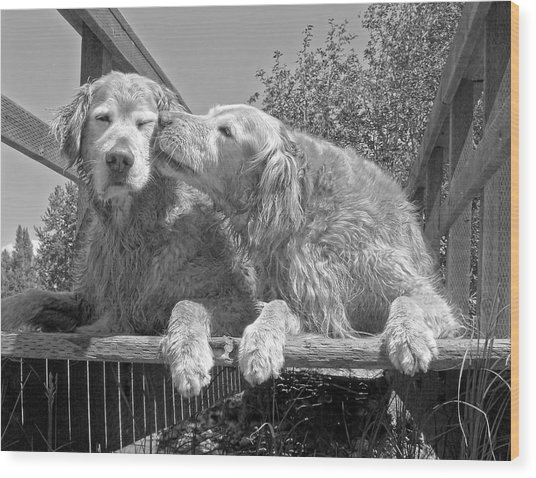 Golden Retrievers The Kiss Black And White Wood Print