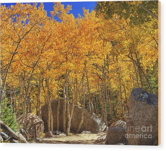 Golden Season 2 Wood Print