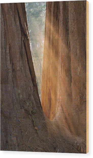 Golden Sequoia Wood Print