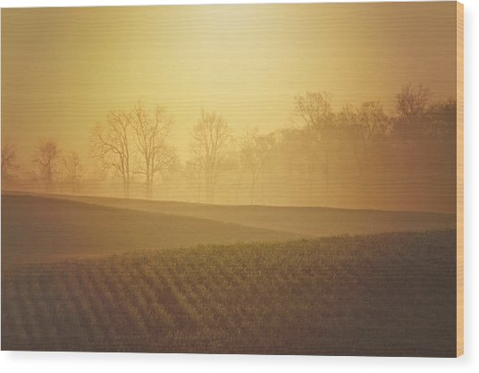 Golden Song Wood Print