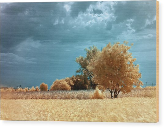 Wood Print featuring the photograph Golden Summerscape by Helga Novelli