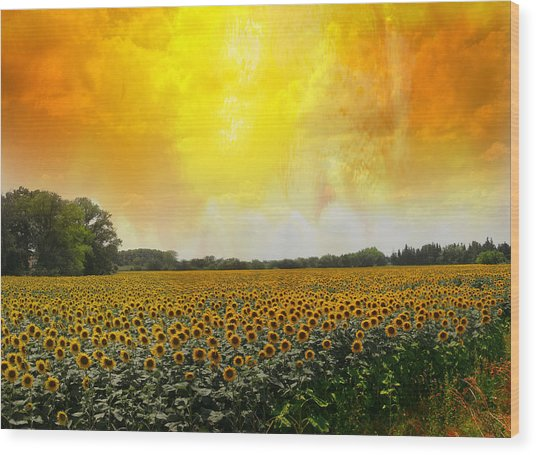Golden Sunflowers Of Nimes Wood Print by Melvin Kearney