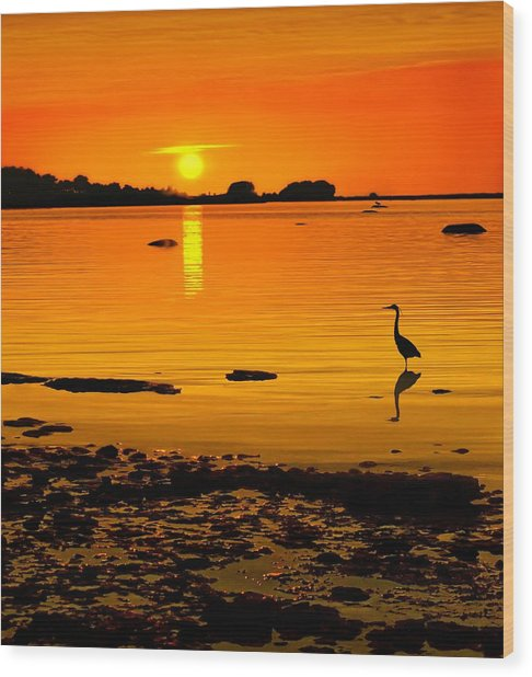 Golden Sunset At The Bay Wood Print