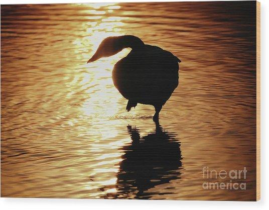 Golden Swan Wood Print
