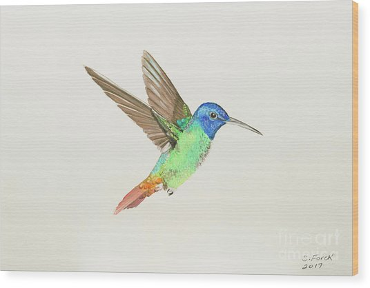 Golden-tailed Sapphire Wood Print