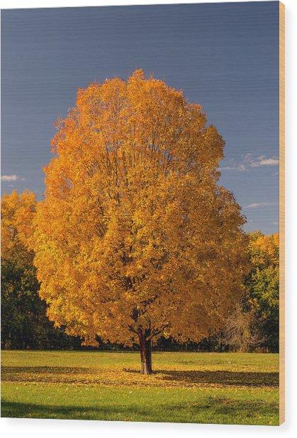 Golden Tree Of Autumn Wood Print