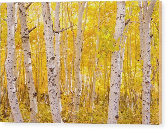 June Lake - Aspen Trees - Golden Trees Wood Print