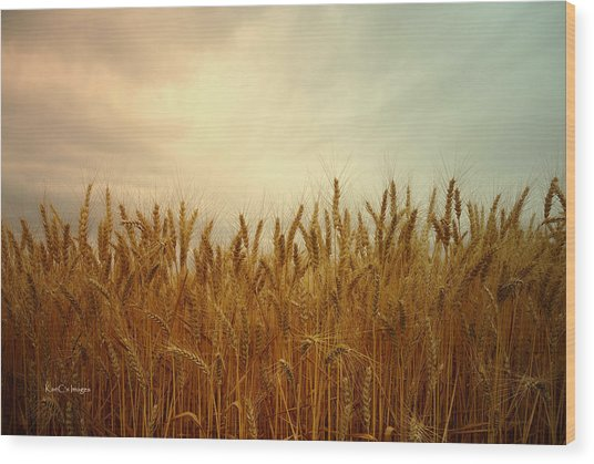 Golden Wheat Wood Print