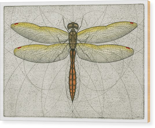 Golden Winged Skimmer Wood Print