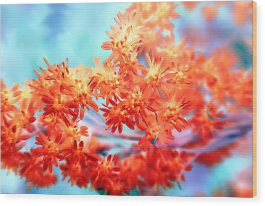 Goldenrod 37 Wood Print
