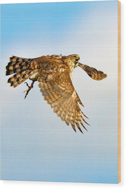Good Hawk Hunting Wood Print