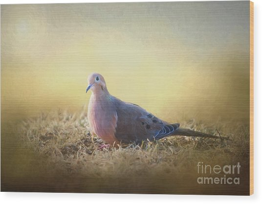 Good Mourning Dove Wood Print